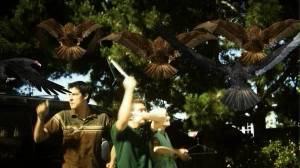 birdemicshockandterror2008b
